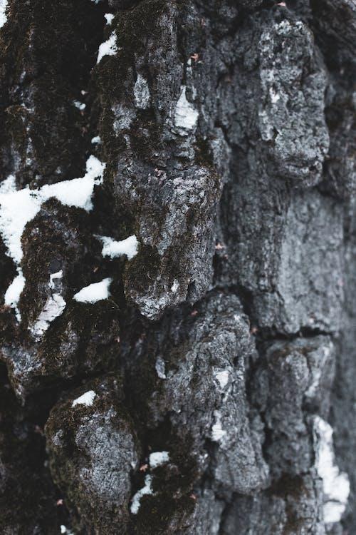 バックグラウンド, 木, 自然