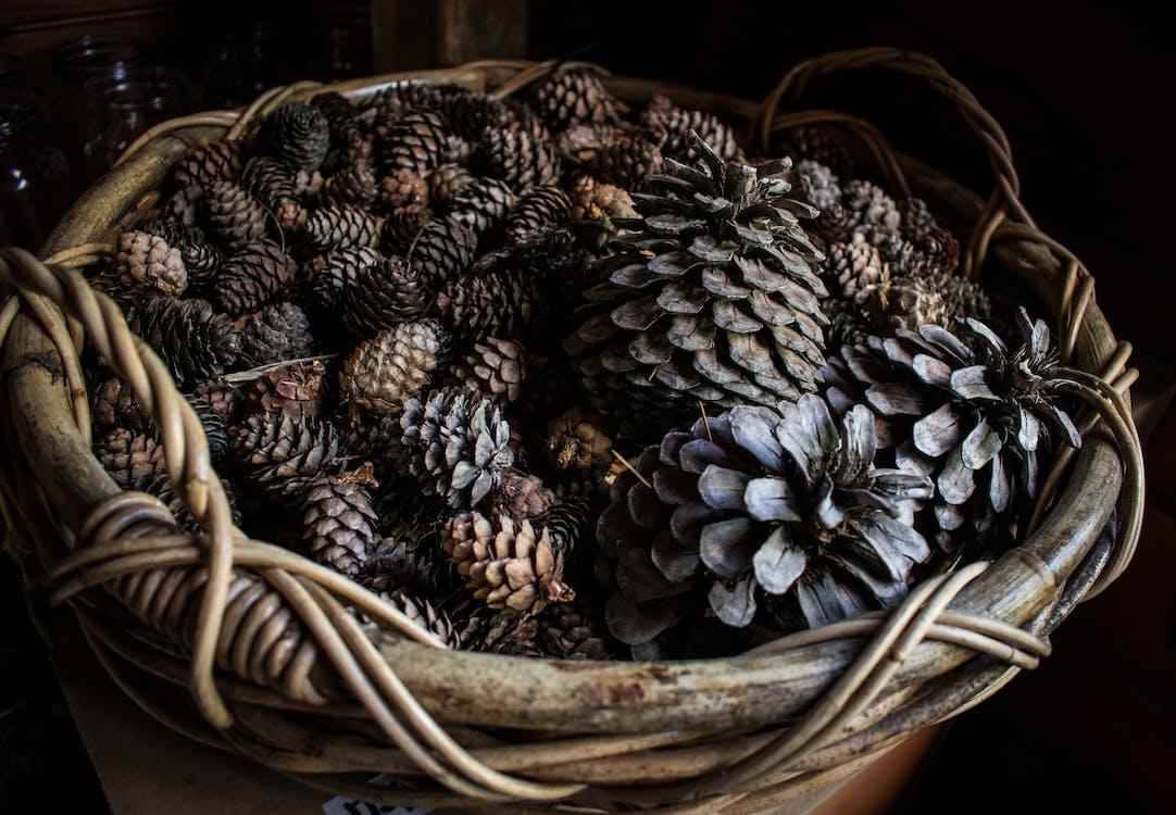 Basket of pine cones