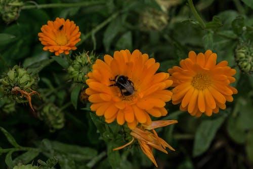 Gratis arkivbilde med #bie, #blomst, #bloom
