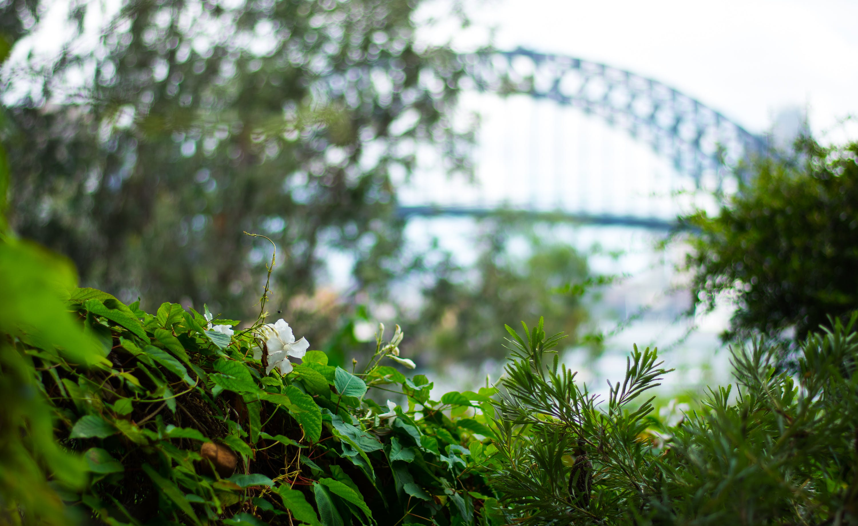 Free stock photo of #garden, #lavenderbay, #sydney, #sydneyHarbourBridge