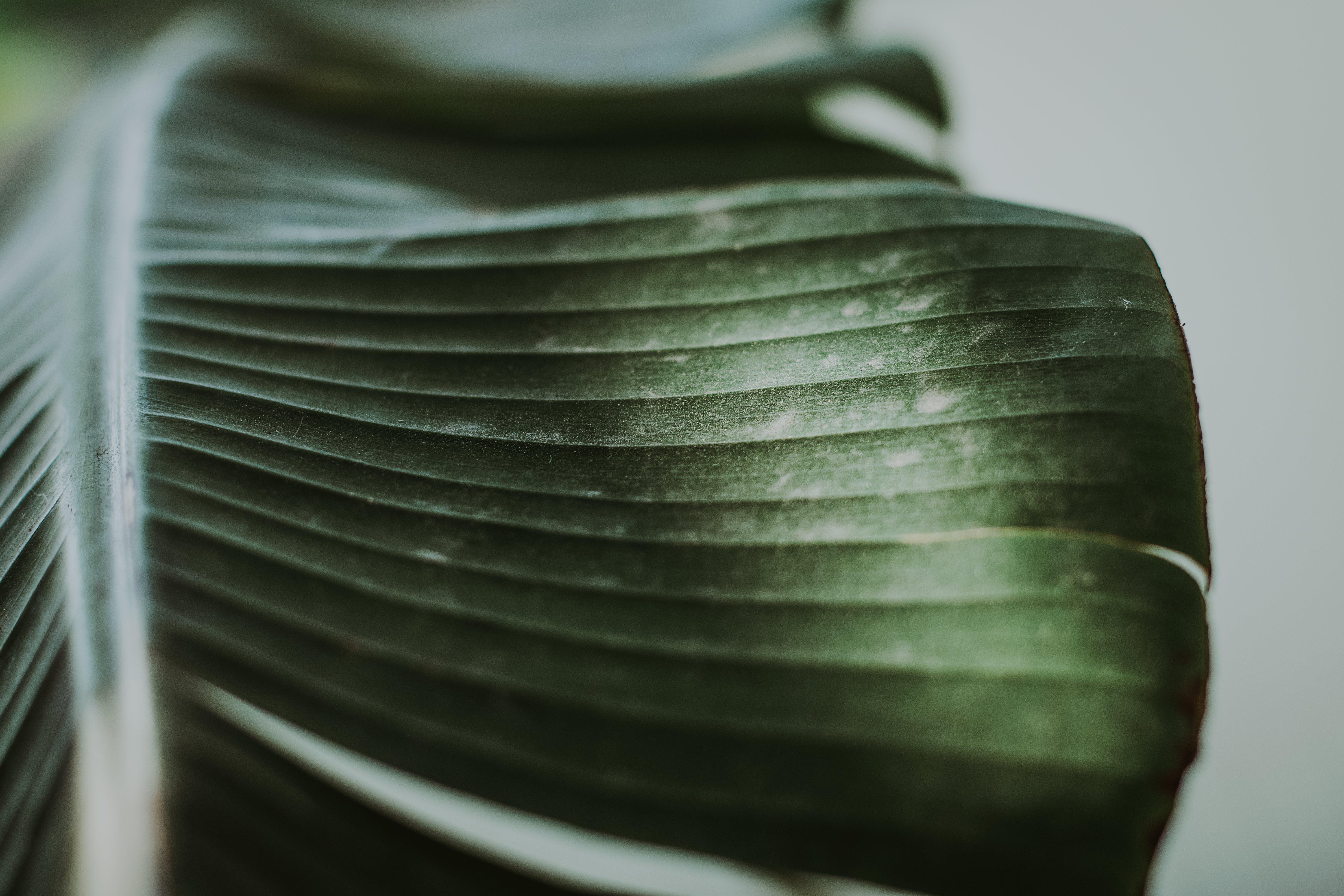 Gratis lagerfoto af close-up, grøn, plante