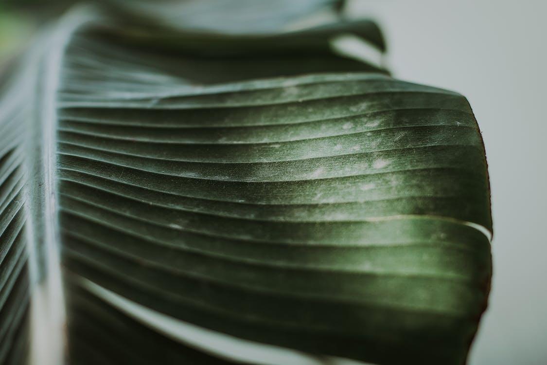 завод, зеленый, растение