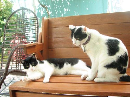 Δωρεάν στοκ φωτογραφιών με Γάτα, γάτες