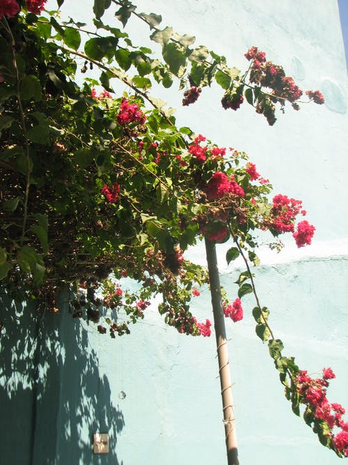 Δωρεάν στοκ φωτογραφιών με όμορφα λουλούδια, όμορφο λουλούδι