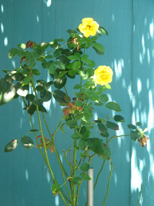 Δωρεάν στοκ φωτογραφιών με ανθόκηπος, όμορφα λουλούδια, όμορφο λουλούδι