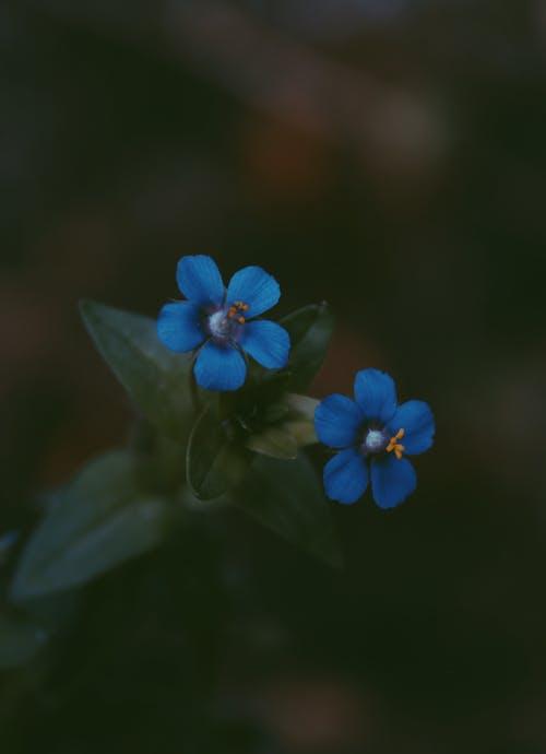 Immagine gratuita di bellissimo, colore, delicato, fiore