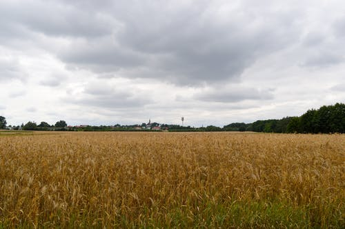Free stock photo of clouds, grains, village