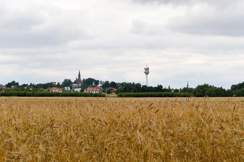Free stock photo of grains, television tower, village