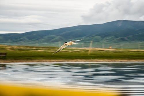 水生鸟 的 免费素材照片