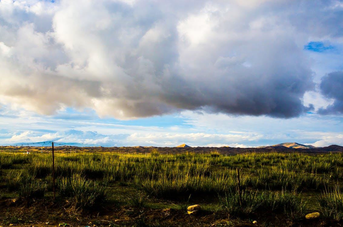 mây bụi, đám mây, đồng cỏ