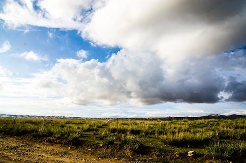 灰云, 牧场, 草原 的 免费素材照片