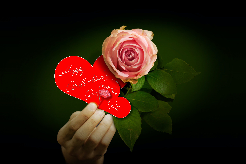 Foto stok gratis hari Valentine