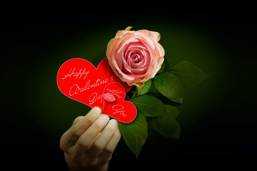 Free stock photo of valentine s day