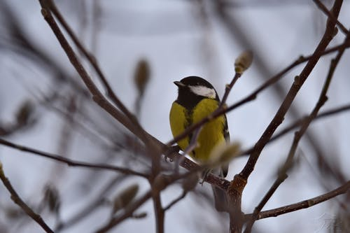 Foto d'estoc gratuïta de animal, bellesa a la natura, bonic, parc d'animals