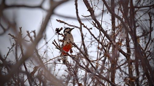 Foto d'estoc gratuïta de animal, arbre, bellesa, bonic