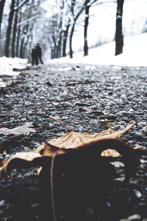 Základová fotografie zdarma na téma cesta, hloubka ostrosti, mletý, suchý list