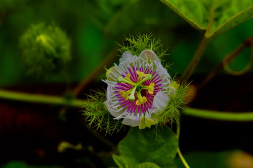 Free stock photo of awesome, beautiful flower, green