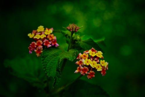 Free stock photo of beautiful flowers, dark green, dark green plants