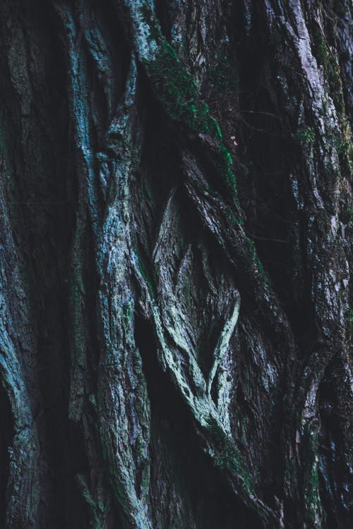 Close-up Photography of Green and Brown Tree Trunk