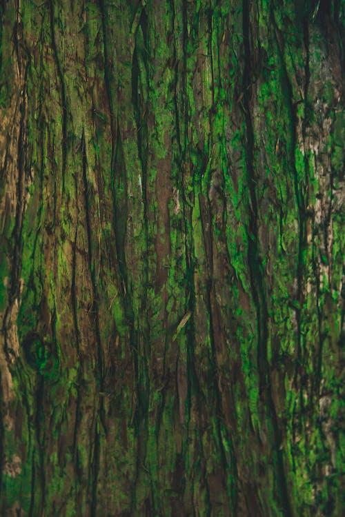 Бесплатное стоковое фото с древесная кора