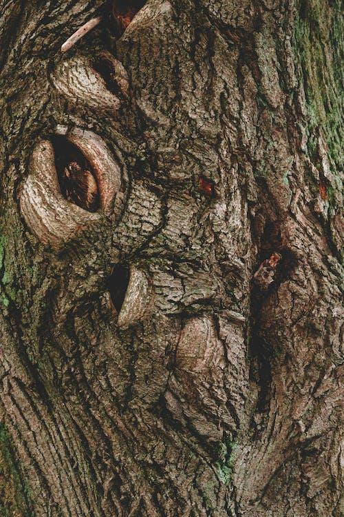 Darmowe zdjęcie z galerii z kora drzewa