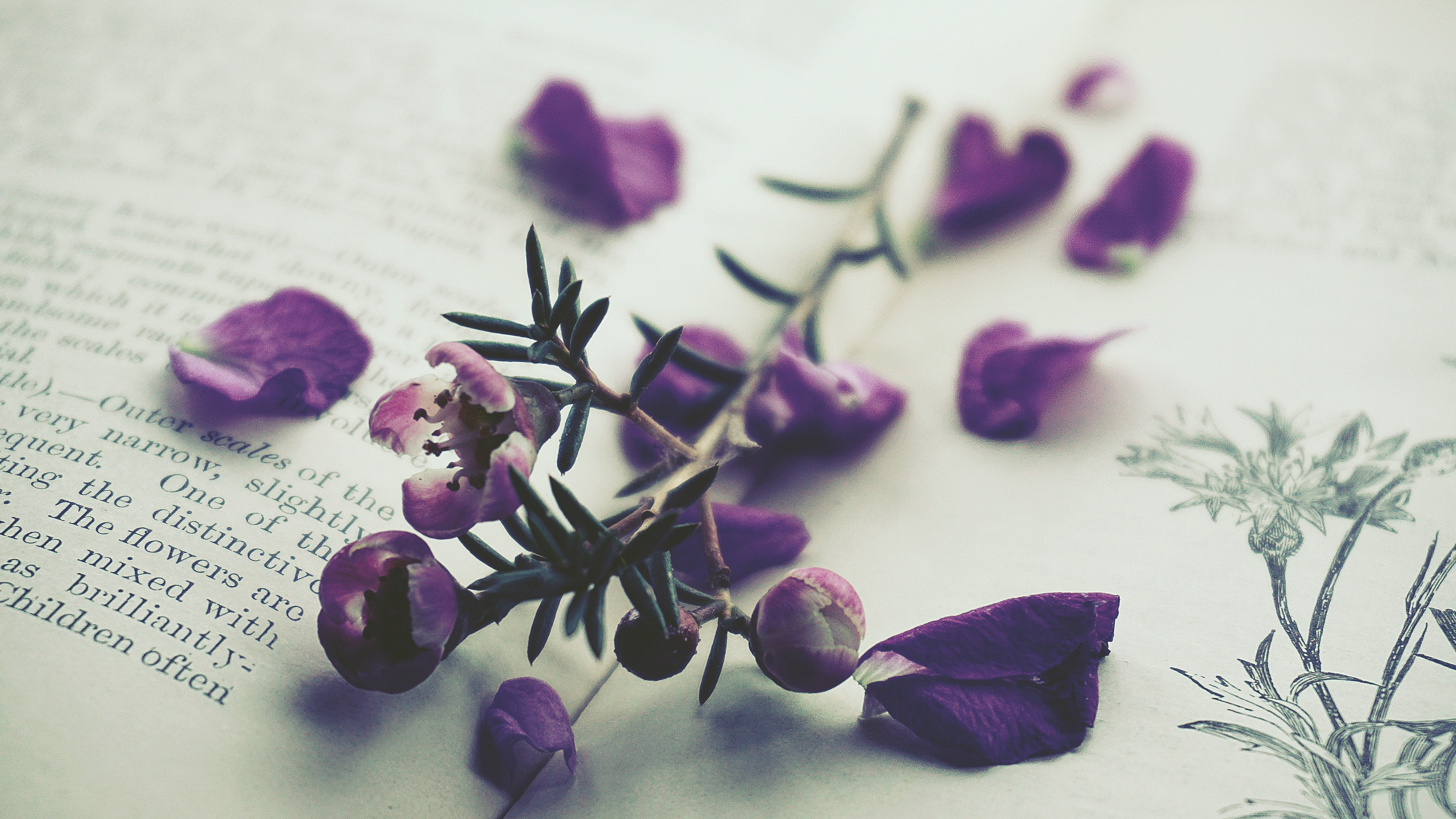 Purple-petaled Flowers on Opened Book