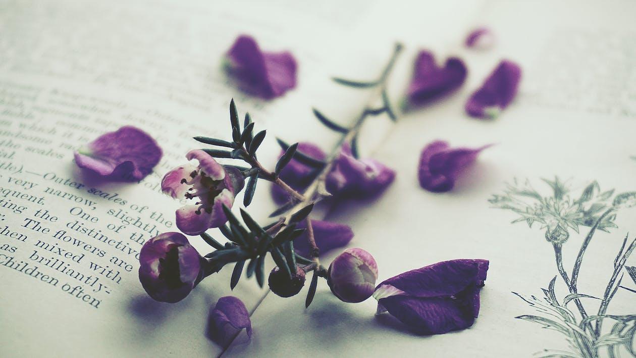 barvy, fialová, fialové květiny