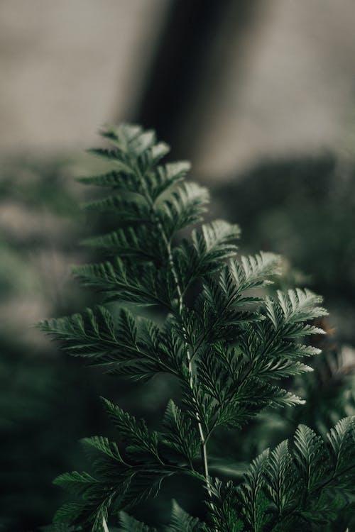 botanikus, elmosódott háttér, fényes