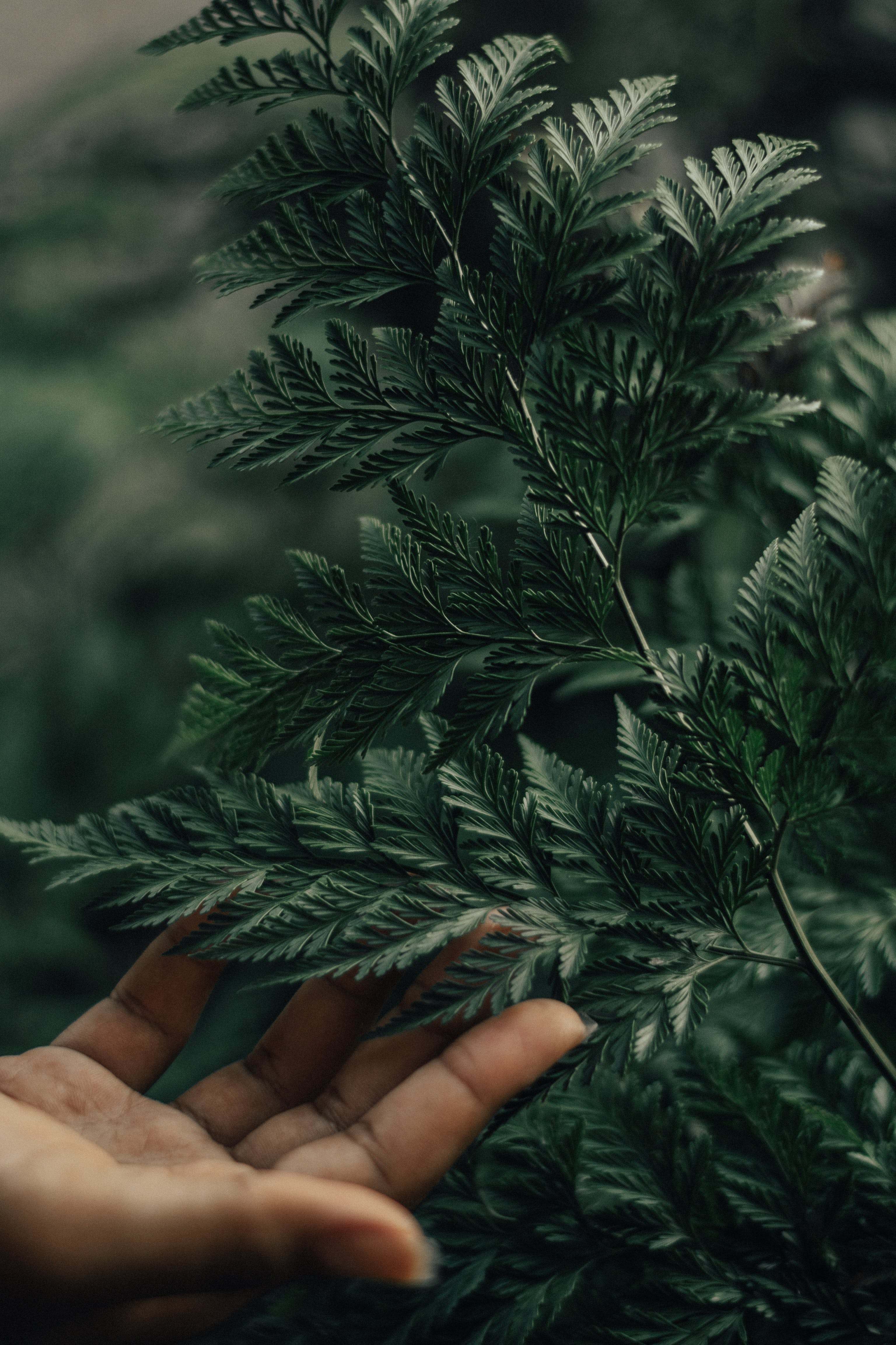 Close-Up Photo of Person Touching Leaves