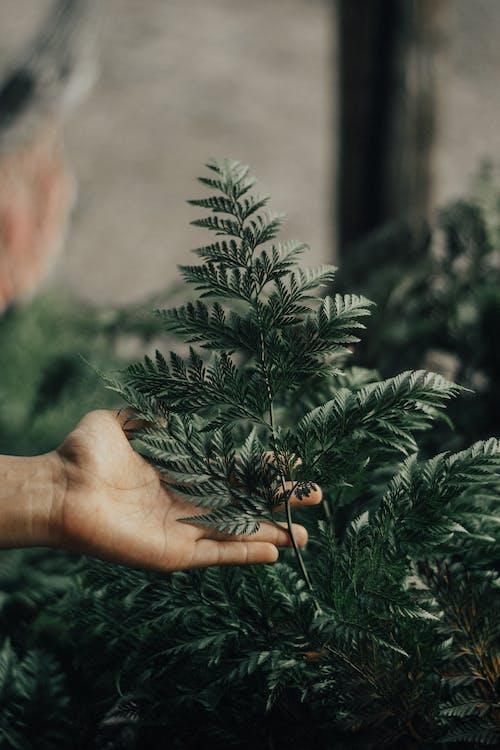 Селективная фокусная фотография зеленолистных растений
