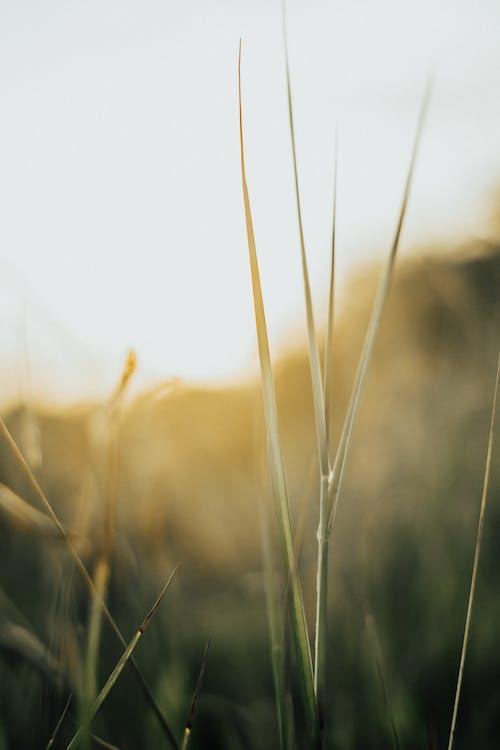 성장, 식물, 집중, 피사계 심도의 무료 스톡 사진