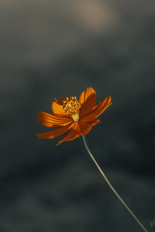 blomma, färgrik, flora
