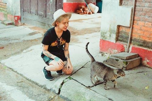 Fotos de stock gratuitas de adorable, animal, calle, felino