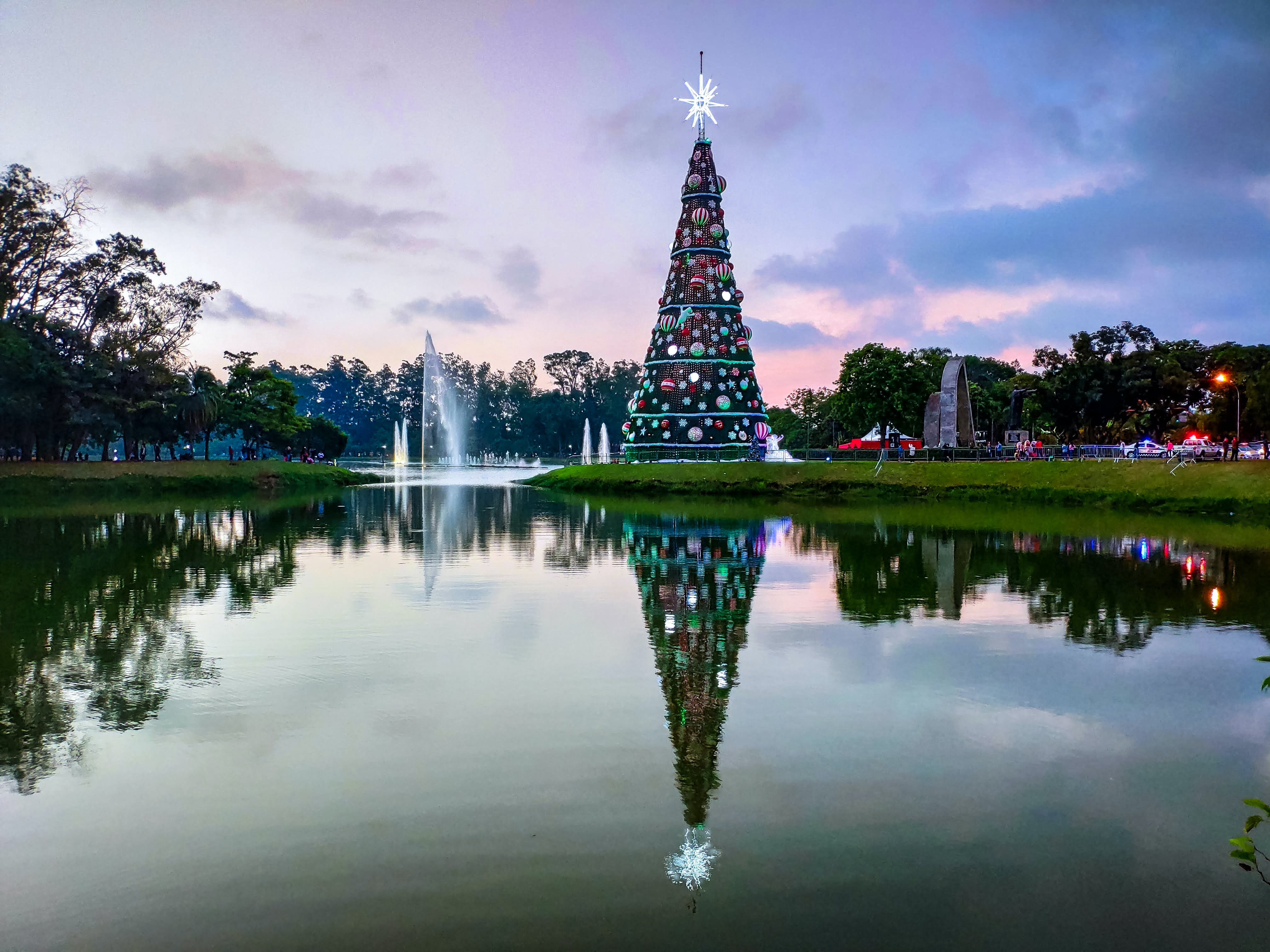 Christmas Tree Beside the Water