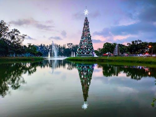 Foto d'estoc gratuïta de aigua, arbre de Nadal, arbres, cel