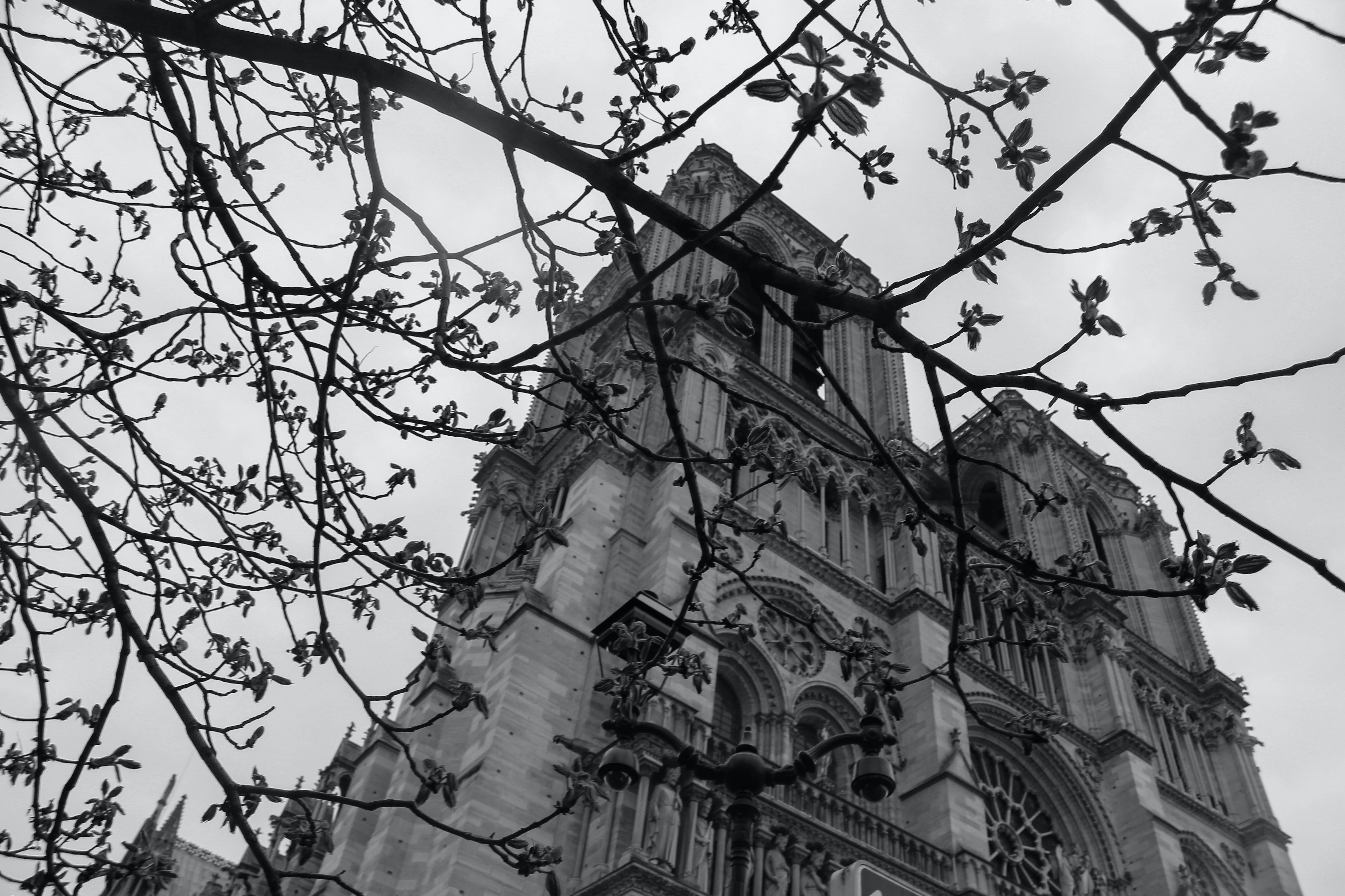 Free stock photo of black and white gothic hidden
