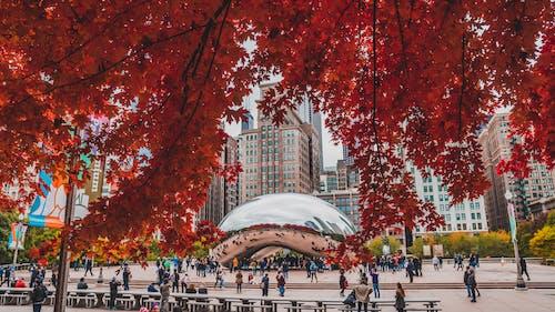 시카고, 원두, 클라우드 게이트의 무료 스톡 사진