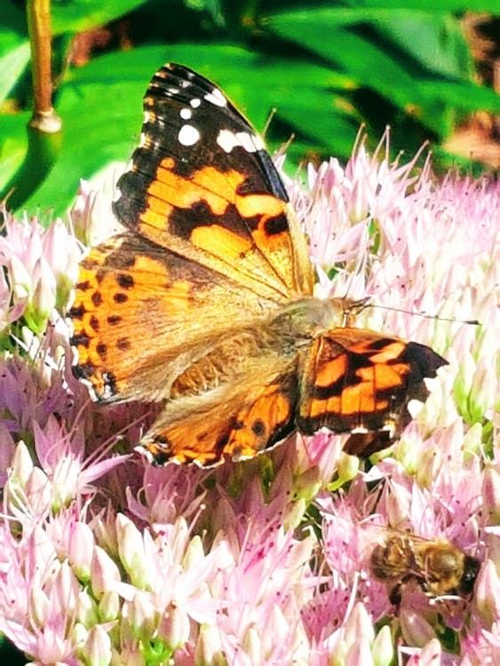 #butterfly #nature #flower
