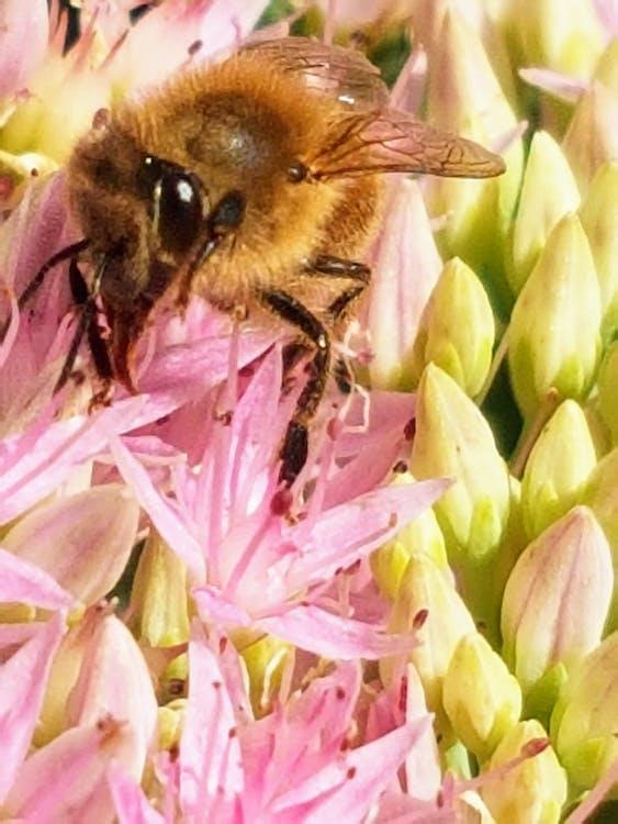 #bee #flower #nature