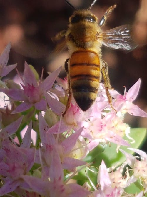 Foto d'estoc gratuïta de #bee #flower #nature