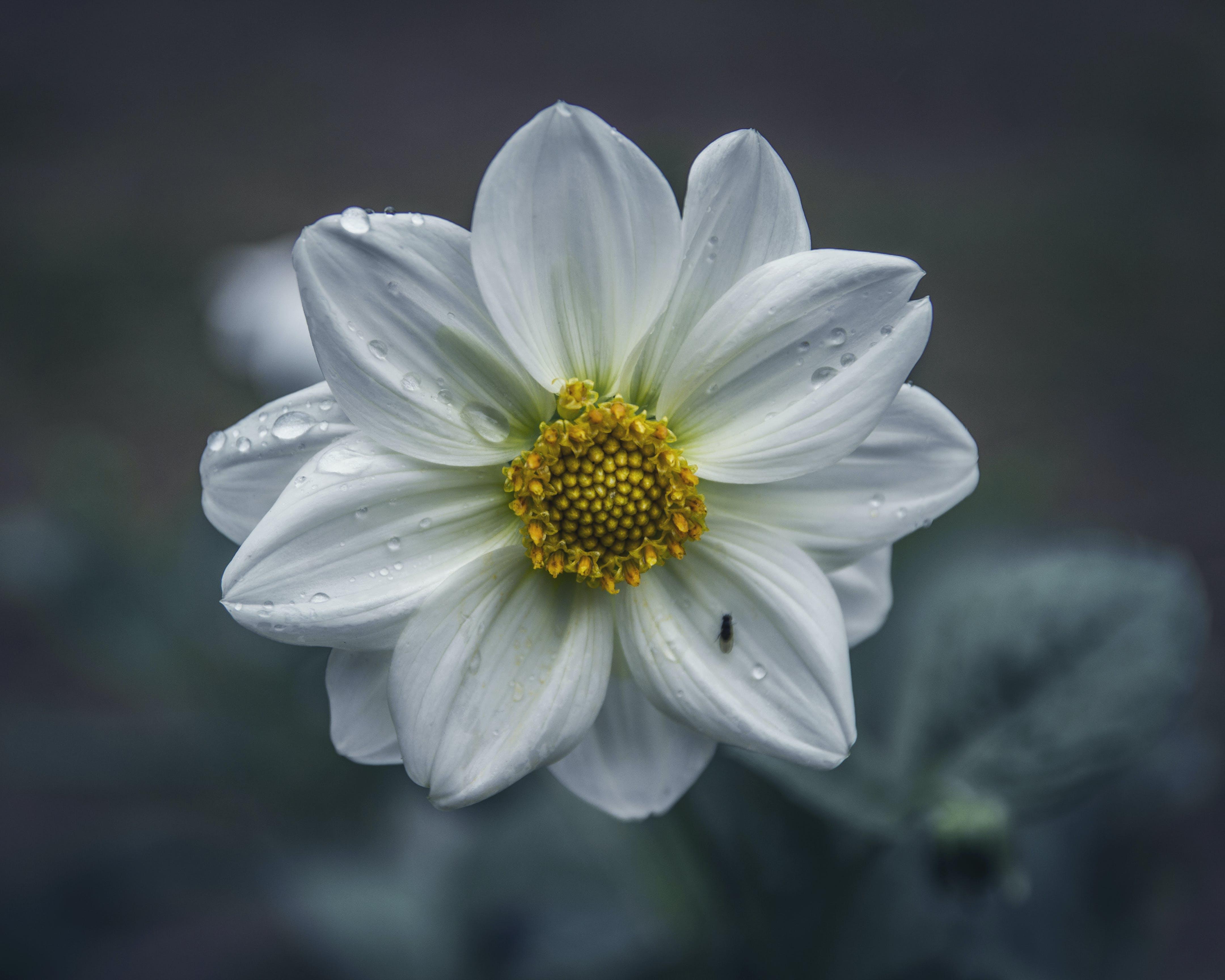Foto stok gratis bunga matahari