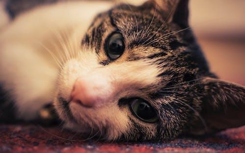 고양이, 고양잇과 동물, 눈, 동물의 무료 스톡 사진
