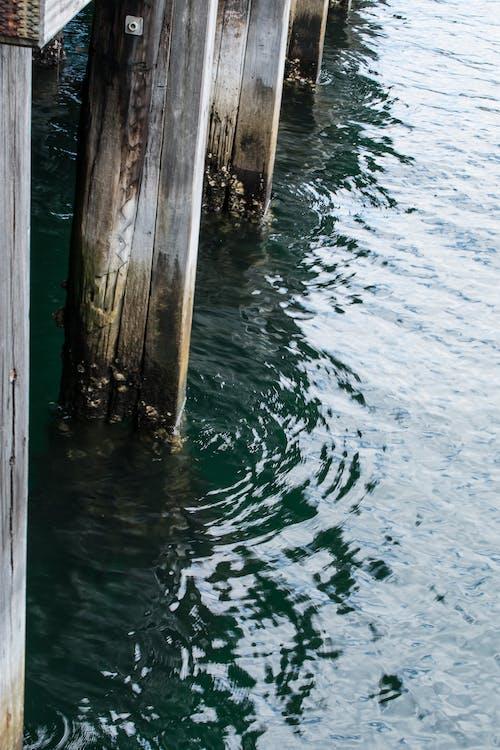 Immagine gratuita di acqua, ambiente, che scorre, flusso