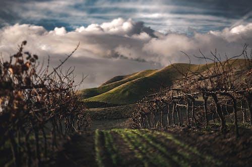 Gratis stockfoto met boerderij, landschap, pad, sportveld