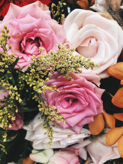 Foto d'estoc gratuïta de blanc, flors boniques, rams de flors, Rosa vermella