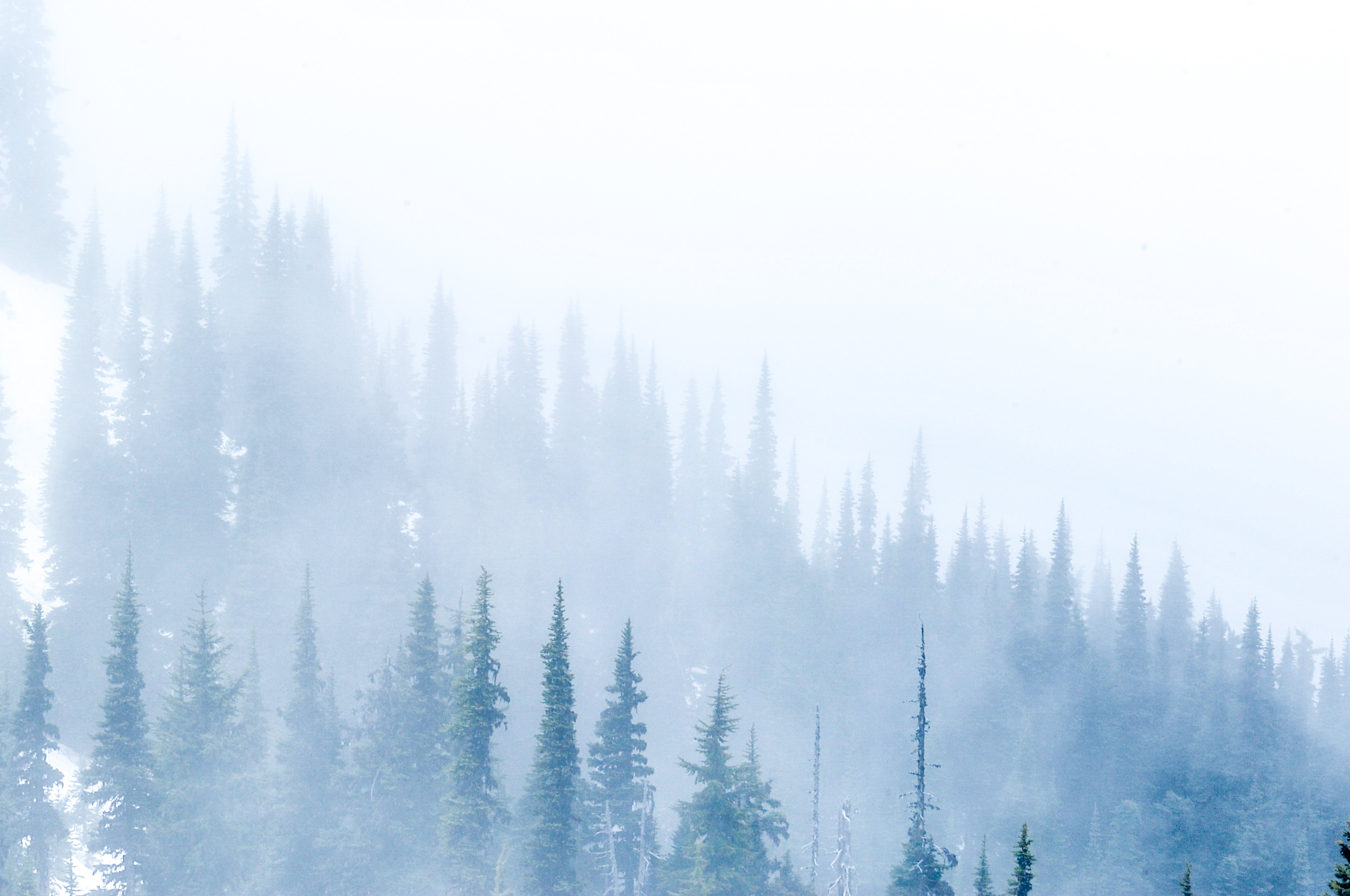 Free stock photo of fog, foggy, forest, hill