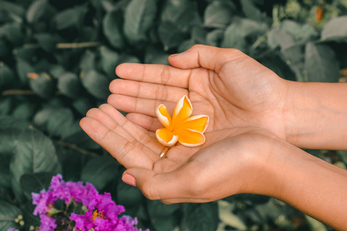 Photo Of Person Holding Yellow Flower