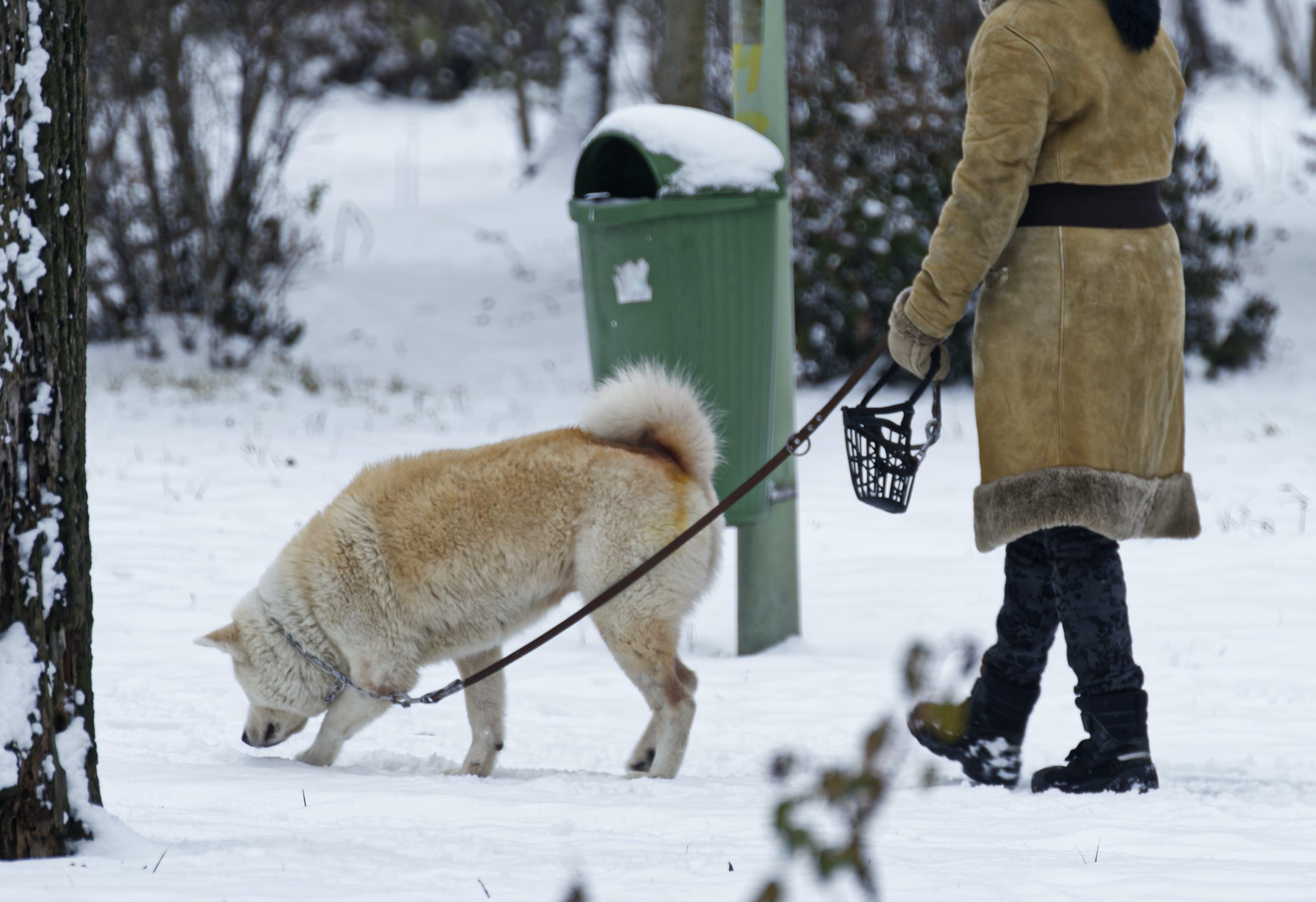 Free stock photo of dog, leash, nature, park