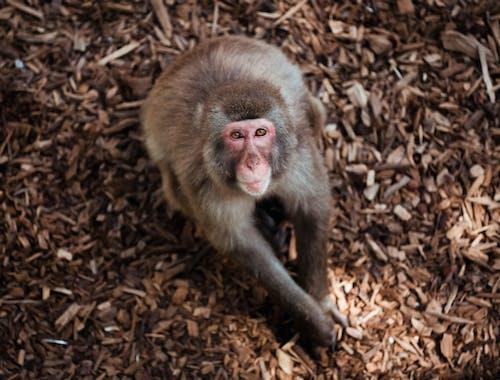 Foto stok gratis binatang, dunia binatang, monyet, potret