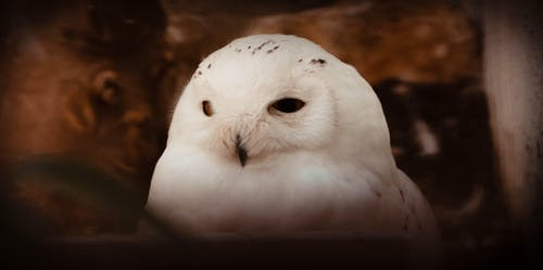 Бесплатное стоковое фото с животное, портрет, портрет животного, сова